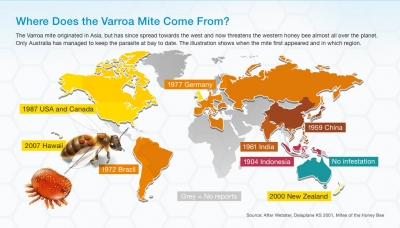 globe infographic of Varroa destructor
