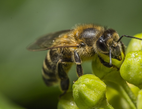Yes, the Bees Are Still in Trouble