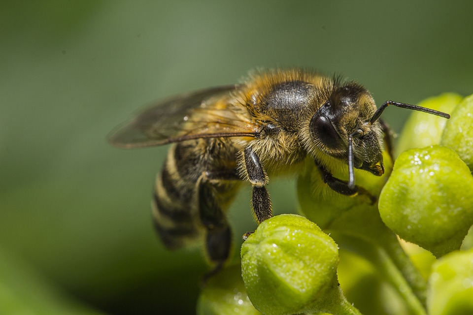 macro shot of a bee on a flower
