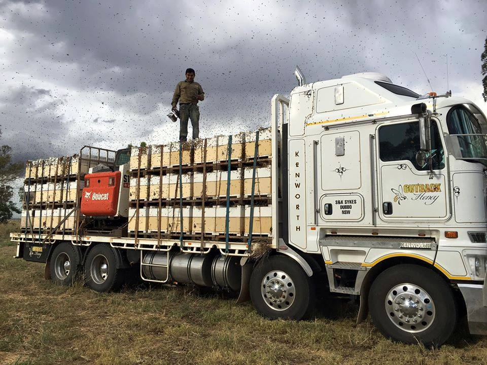 truck with beehives for commercial beekeeping