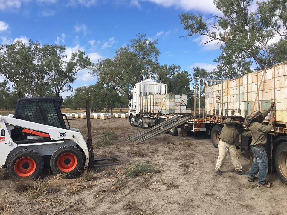 unloading beehives from a truck