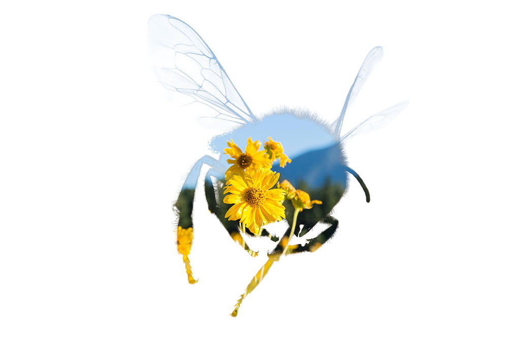 bee silhouette on a white background with a yellow flower in it