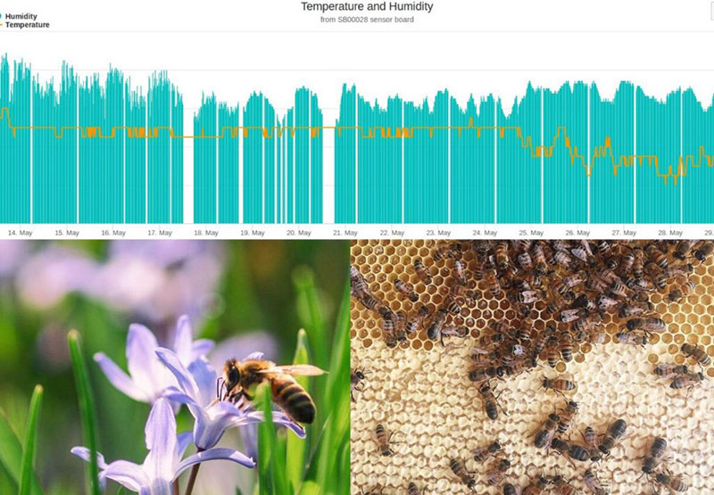 bees and diagrams from hive monitoring equipment