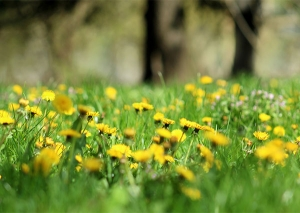 a green meadow with grass and yellow flowers