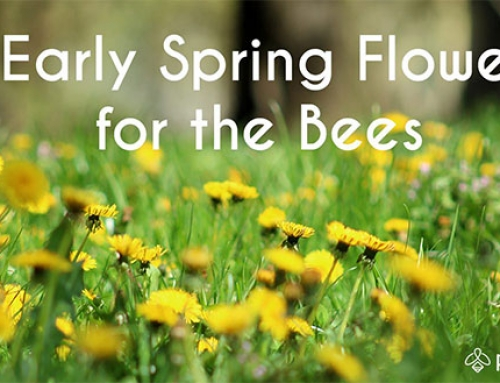 5 Early Spring Plants for the Bees